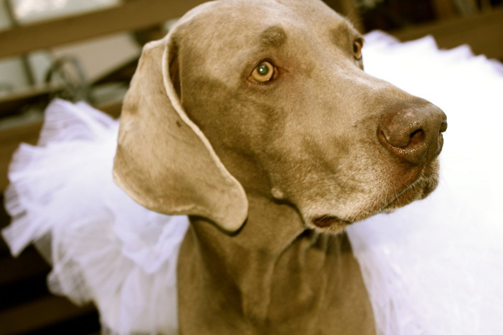 Two Dogs and a Wedding Dress: 3ten.ca